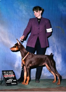 BaeBea International Champion Title with breeder/handler Mary