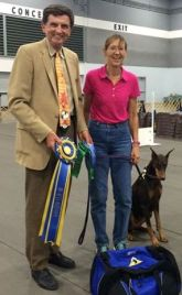Dash getting her Beginning Novice title at the Mt Hood Doberman Club Specialty at Stumptown, July 17, 2015.