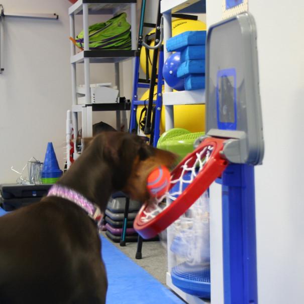 Earning an AKC Advanced Trick Dog Title – BaeBea's Dog Training