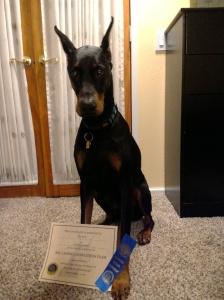 Tucker earned his CGC, Nov 2015
