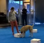 AKC'S NEW SCENT WORK PROGRAM – BaeBea's Dog Training